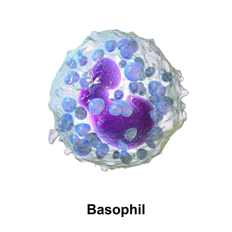 "Basofilo. Fonte Immagine: Eosinofilo. Fonte Immagine: Blausen.com staff (2014). ""Medical gallery of Blausen Medical 2014"". WikiJournal of Medicine 1 (2). DOI:10.15347/wjm/2014.010. ISSN 2002-4436. - Own work"